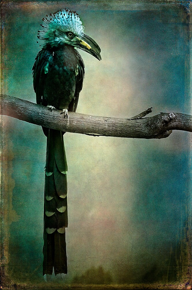 A West African White Crested Hornbill Portrait by alan shapiro