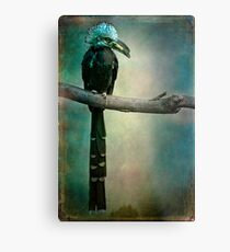 A West African White Crested Hornbill Portrait Metal Print
