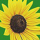 Glorious Sunflower by Linda Miller Gesualdo