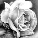 Rose by Bridie Flanagan