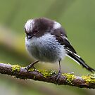 Long tailed tit by Kevin  Poulton