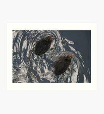 Baby Coots Art Print