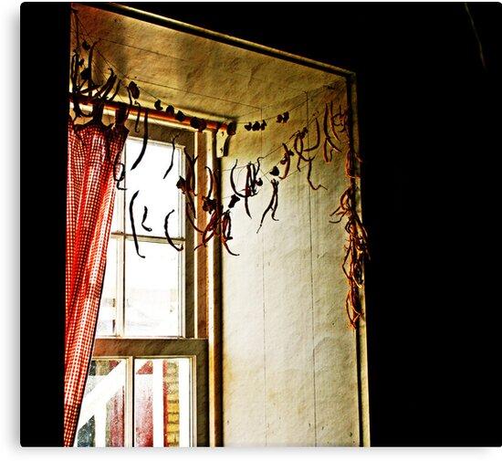 the window by Lynne Prestebak