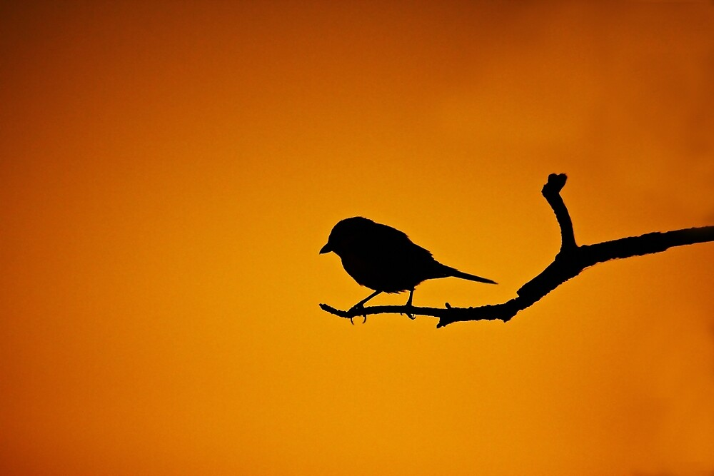 BIRD SILHOUETTE IN SUNSET ON A BRANCH by CebotariN