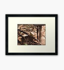 Common Squirrel Monkey, Gauteng, South Africa Framed Print