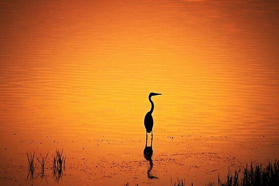 BIRD SILHOUETTE IN SUNSET by CebotariN