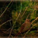 Cardinal by DottieDees
