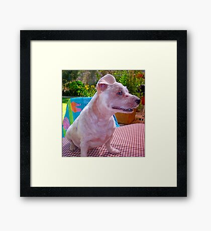 Warts and all - Fact or Fiction Framed Print