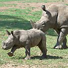 Mother's Love -  Mum & baby Black Rhino's  by clearviewstock