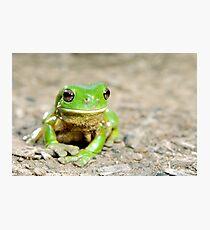 Litoria Caerula - Green tree frog on ground Fotodruck