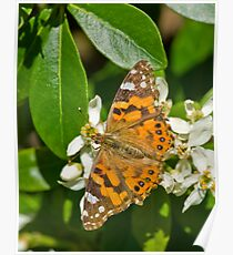 Orange Butterfly on Flower Poster