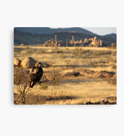 Red-tailed Hawk ~ Texas Canyon, AZ viewing Canvas Print
