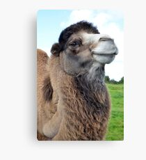 Comical Smiling Bactrian Camel Face Canvas Print