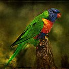 Rainbow Lorikeet by Barb Leopold