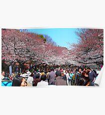 walking under the sakuras Poster