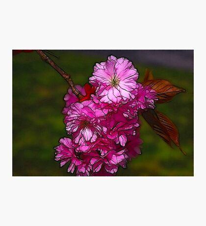 Cherry Blossom  (Spring) Photographic Print