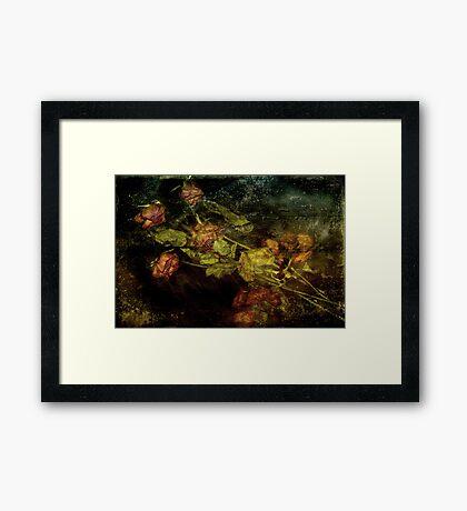 Ashes of Roses Framed Print