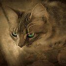 Cat Eyes by DottieDees
