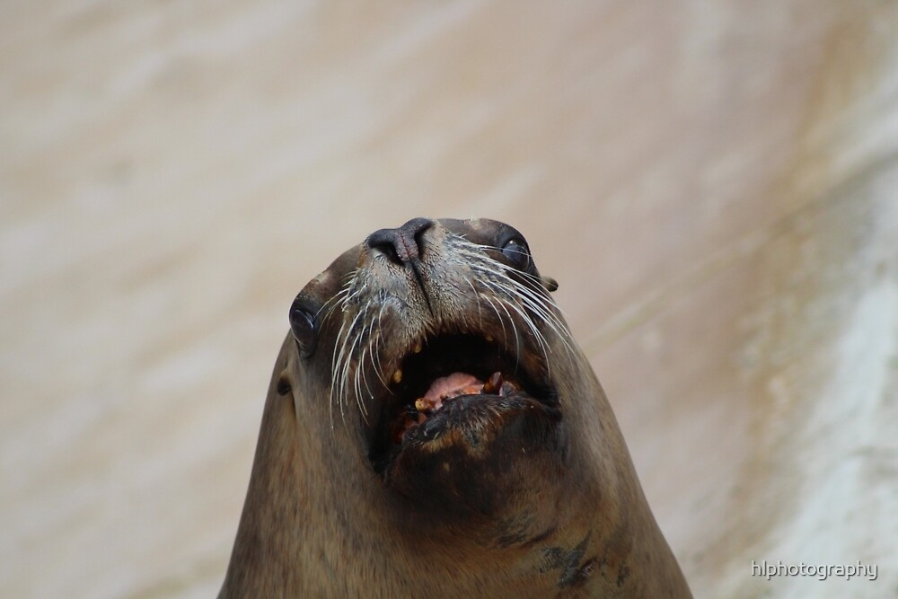 Funny Sea Lion by hlphotography