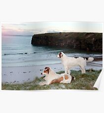 beach view with two dogs Poster