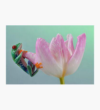 Pastel colours Photographic Print