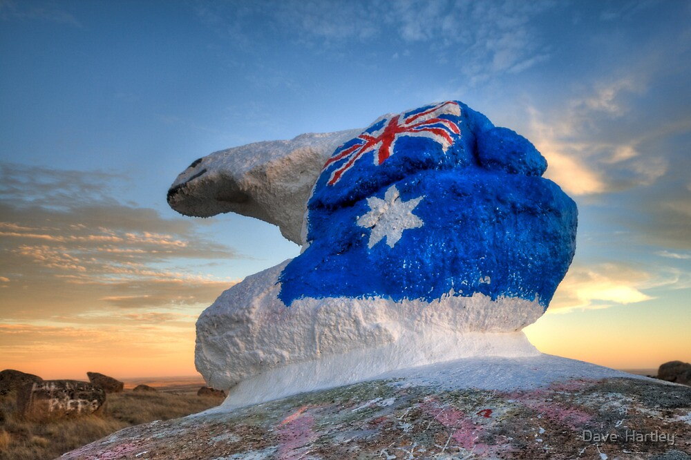 "Bear ""N"" it for Australia... by Dave  Hartley"