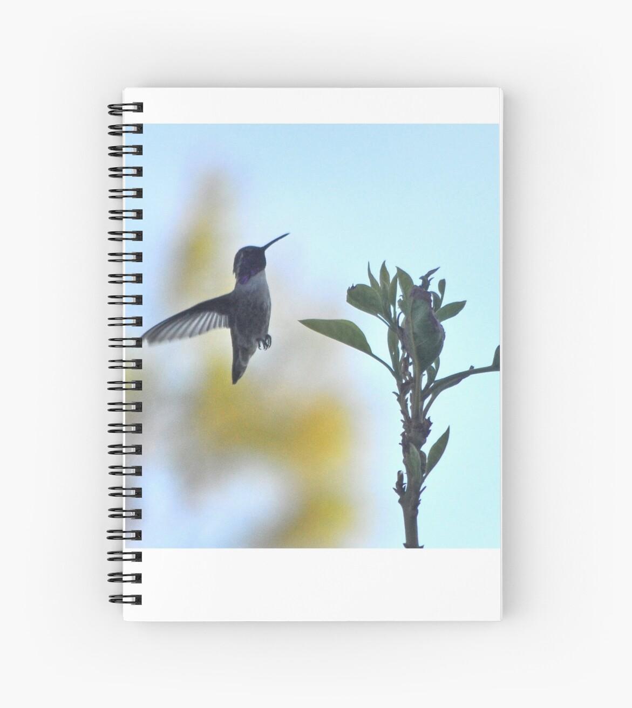 MALE COSTA'S HUMMINGBIRD CHECKING THE AVOCADO TREE by JAYMILO