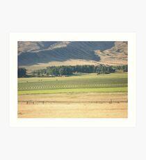 Alfalfa Field in Montana Art Print