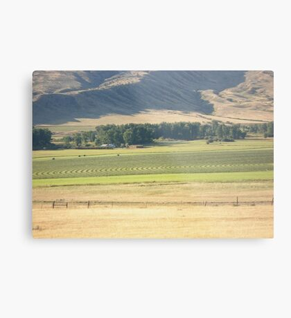 Alfalfa Field in Montana Metal Print
