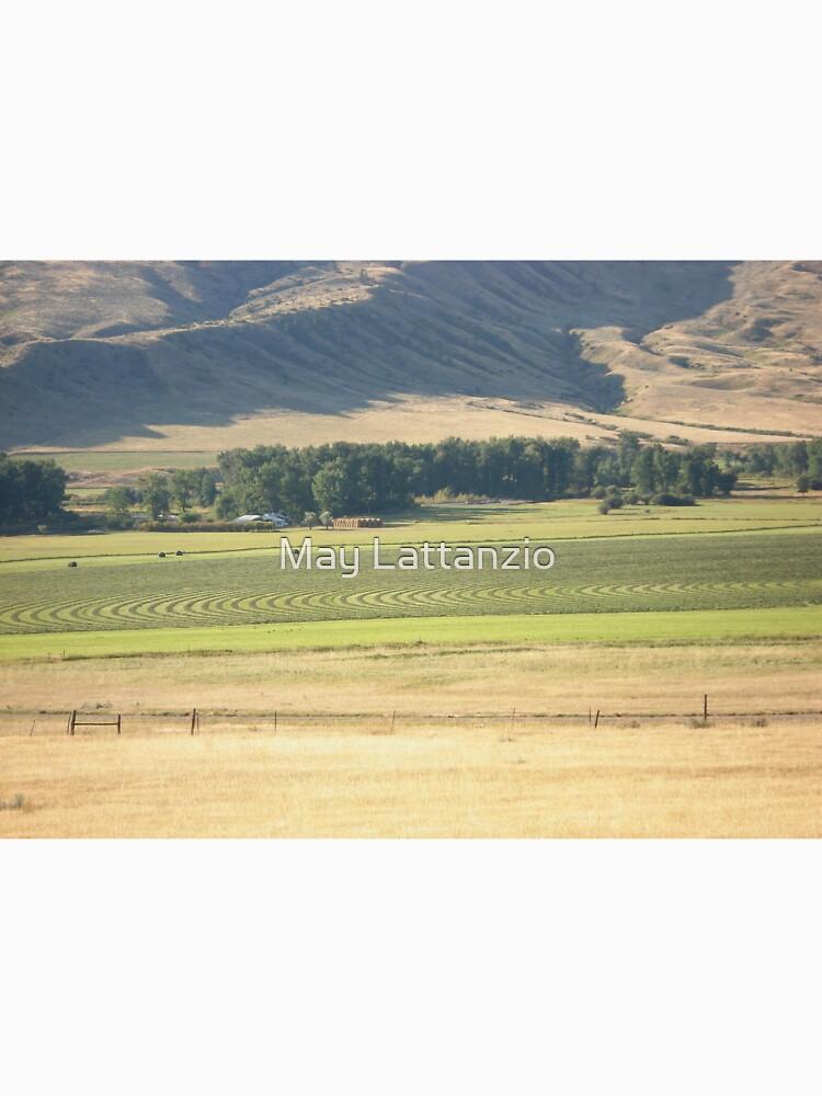 Alfalfa Field in Montana by MayLattanzio