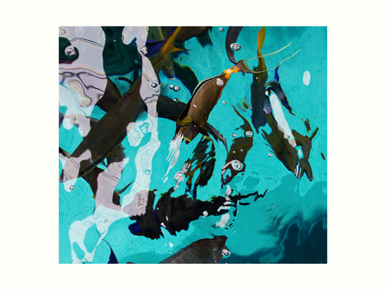 Fish From Above by Michael  Moss