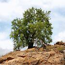 MAPUNGUBWE - A single tree by Magriet Meintjes