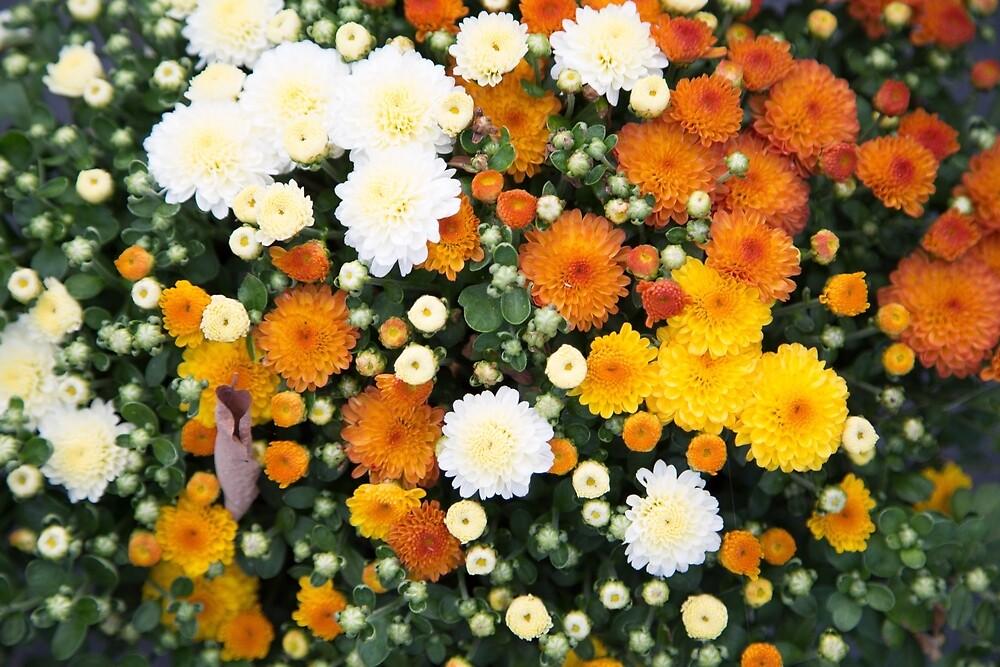 Fall Flowers by PerfectCoffee