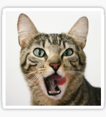 Tilly Tabby Tongue Twister Sticker