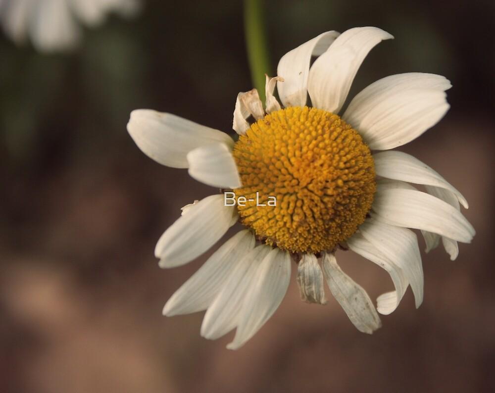 Bashful Flower by Be-La