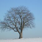 January by Birgit Schnapp