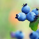 Blueberries by Alain Turgeon