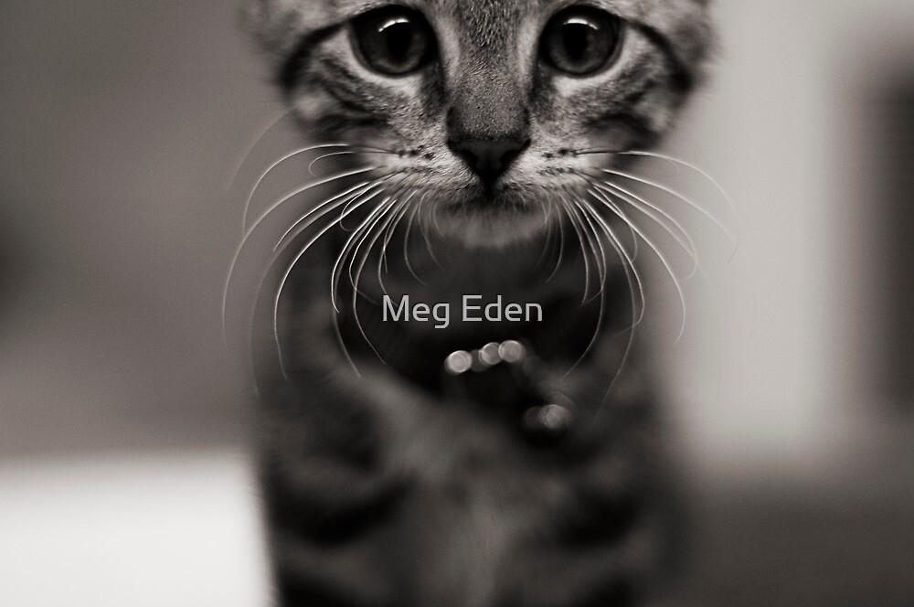 Zaphod by Meg Eden