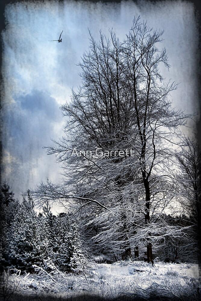 Winter's Day by Ann Garrett