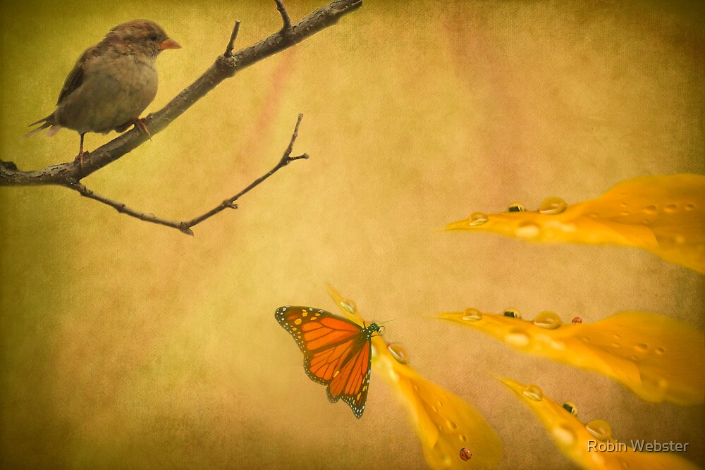 Sharing the Light by Robin Webster