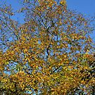 Autumn landscape,yellow leaves. by starchim01