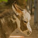 Young Donkey by ArianaMurphy