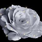 JANUARY ROSE by RoseMarie747