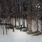Woods Filling with Snow by Mary Ann Reilly