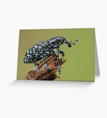 Botany Bay Weevil Greeting Card