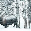Buffalo Winter by peaceofthenorth