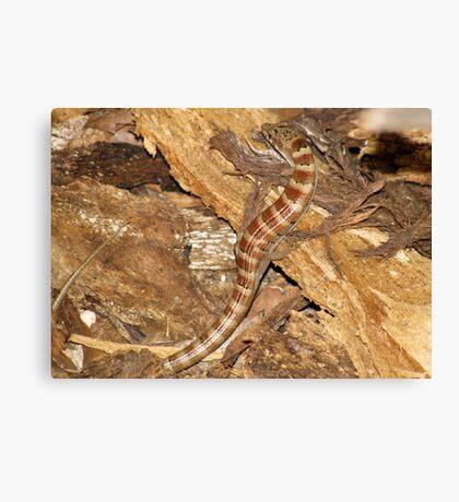 Madrean Alligator Lizard Canvas Print