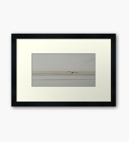 Jonathan - seagull at the beach in NZ Framed Print