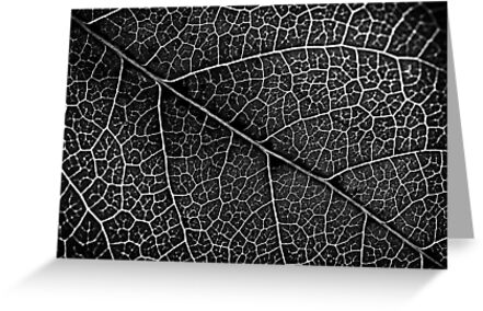 Leaf Projection by Richard Lam
