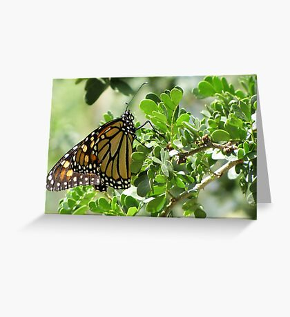 Butterfly ~ Monarch Greeting Card